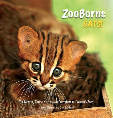Zooborns Cats By Bleiman, Andrew/ Eastland, Chris